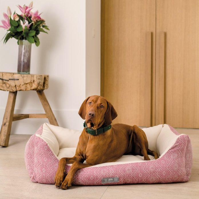 presse 2000x2000px hotel 696x696 - DOGSTYLER® im Urlaub?/ Immer mehr Hoteliers setzen auf Komfort für den Hund