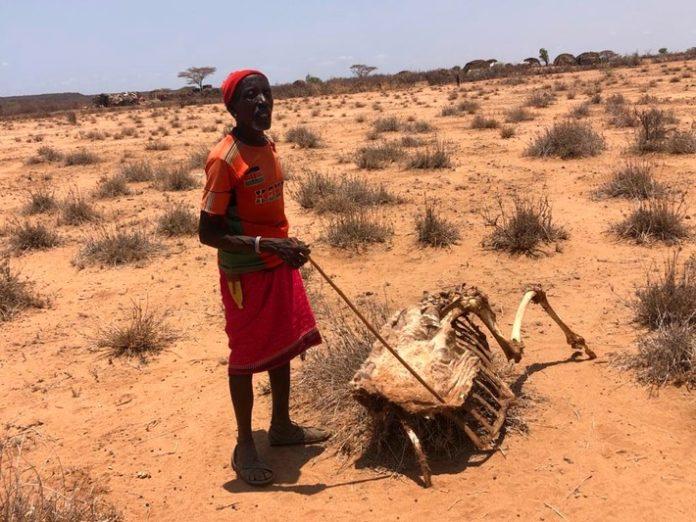 Kenia Viehhirte DC3BCrre 696x522 - Kenia: Mehr als zwei Millionen Menschen von Dürre betroffen / Malteser und Johanniter helfen Bevölkerung in ländlichen Regionen