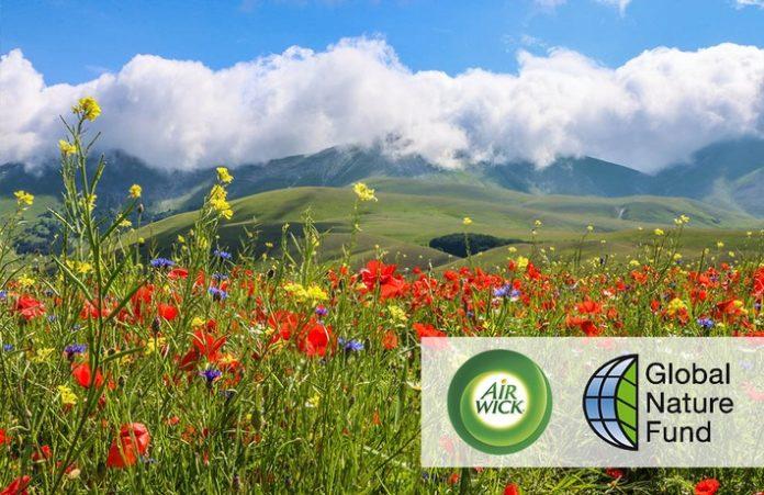 """Reckitt Naturschutzibal20Nature20Fund 696x451 - Naturschutzinitiative """"Gemeinsam für blühende Wiesen"""": Air Wick und Global Nature Fund pflanzen 30 Millionen Wildblumen"""